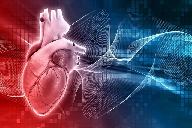 In Freiburg und Bad Krozingen wird der Zellverbund des Herzens untersucht