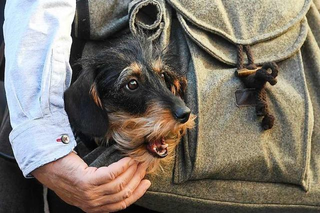 Lenzkirch erhöht die Hundesteuer um 21 Prozent – Kampfhunde kosten jetzt 1480 Euro