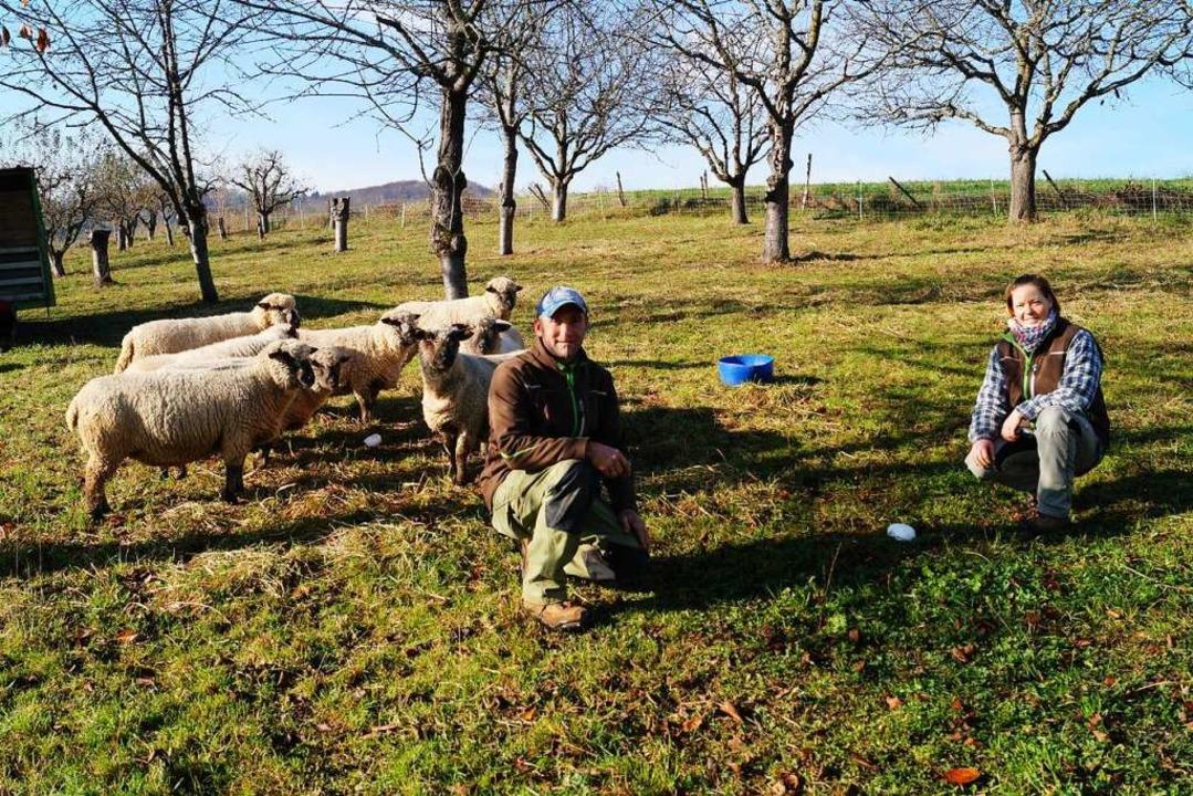 Seine Shropshire-Schafe setzt das Ehep... Pflege ihrer Christbaumplantagen ein.  | Foto: Silke Hartenstein