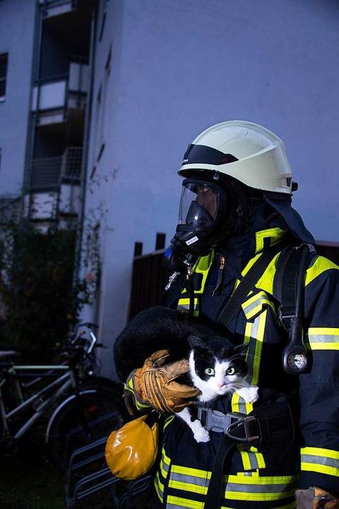 Gerettet wurde auch eine Katze.    Foto: Volker Münch