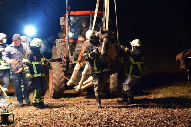 Feuerwehr rettet abgestürztes Pferd und wärmt es mit Scheinwerfern