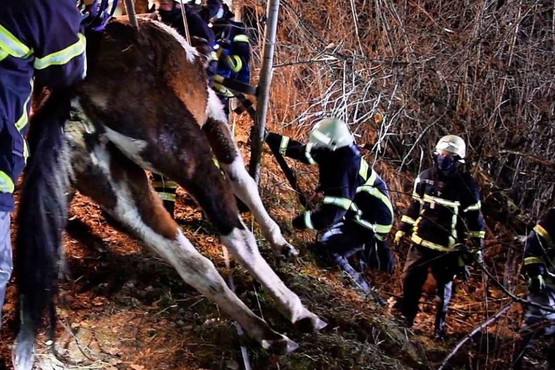 Ein Eindruck von der Böschung, den das Pferd hinabgestürzt war.  | Foto: Kamera24