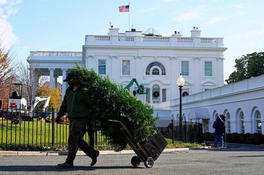 Ein Arbeiter transportiert einen Tanne...n des Weißen Hauses angebracht werden.  | Foto: Patrick Semansky (dpa)