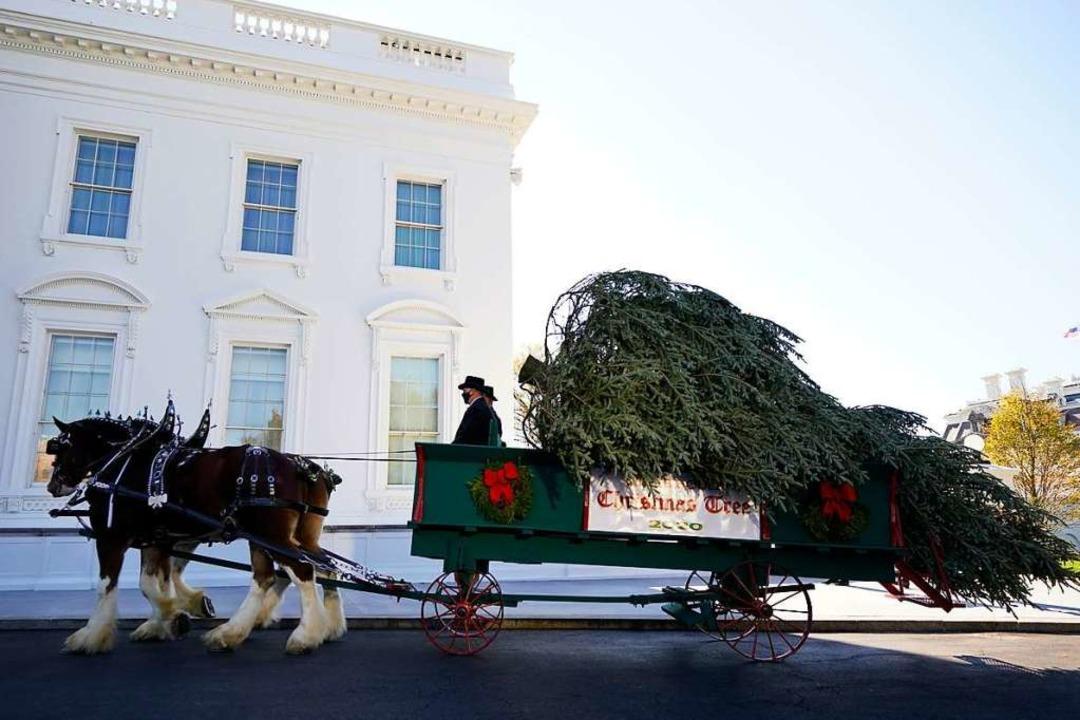 Der offizielle Weihnachtsbaum des Weiß...rdportikus des Weißen Hauses gebracht.  | Foto: Andrew Harnik (dpa)