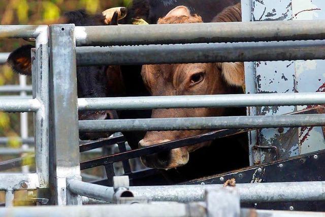 Schlachthöfe und Landratsämter stehen sich oft zu nah