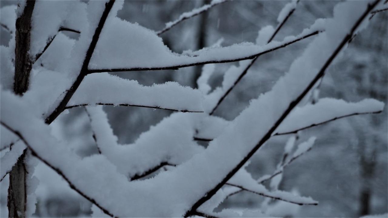 Der erste Schnee im Hochschwarzwald.  | Foto: Susanne Gilg