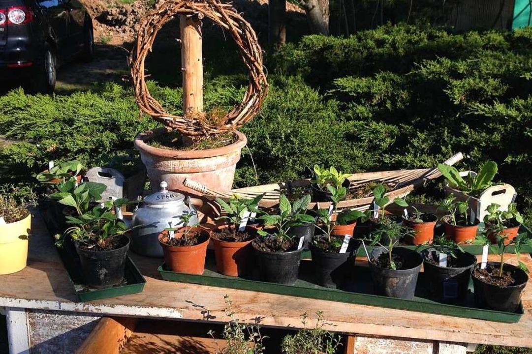 Gegen Spende abzugeben: Pflanzen  | Foto: Kistler