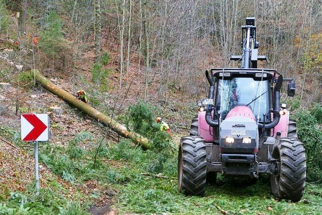 In Bad Säckingens Wäldern werden bis zu 1000 Bäume gefällt