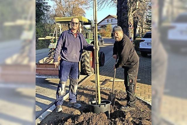 Kastanienbäume gepflanzt