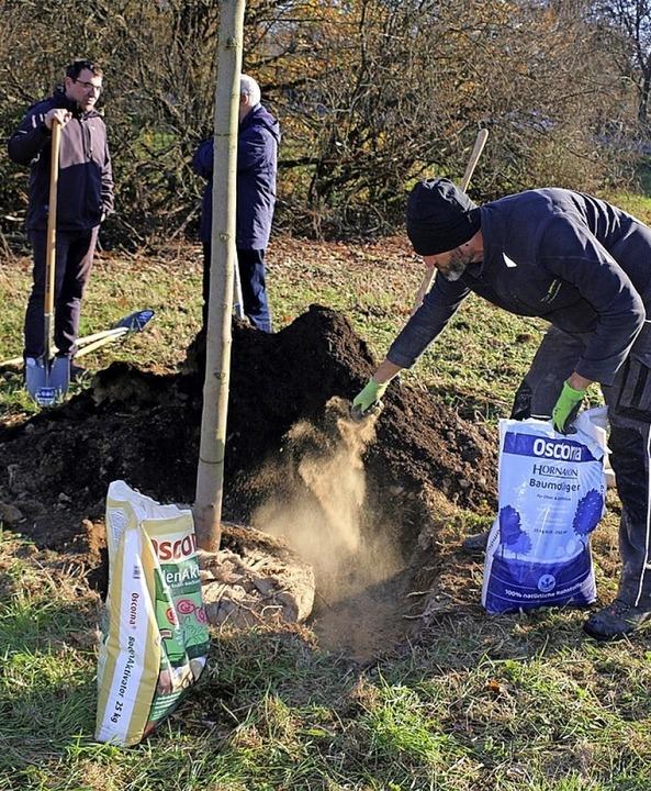In den ersten drei Lebensjahren brauchen Bäume mitunter Dünger.    Foto: Stadtverwaltung Weil am Rhein