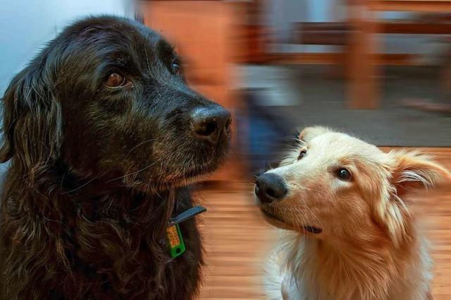 Firmen und Hundehalter in Vörstetten müssen künftig mehr zahlen