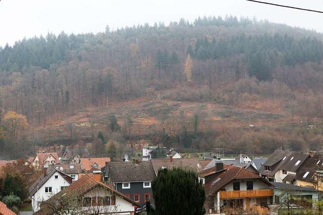Am Sulzberg werden viele Bäume geschlagen, weil sie krank sind