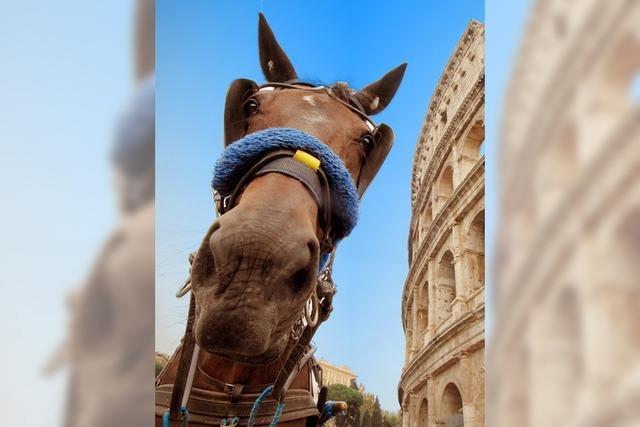 Rom verbannt Pferdekutschen