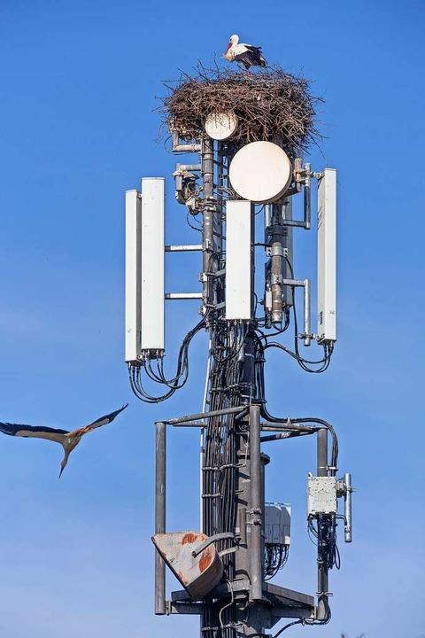 Nicht jeder pflegt mit Mobilfunkmasten...so sorglosen Umgang wie dieser Storch.  | Foto: Uwe (stock.adobe.com)