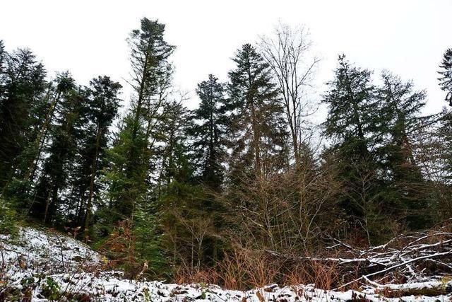 Der Heitersheimer Wald profitiert von seiner hohen Lage