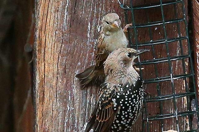 Vögel sollten das ganze Jahr über gefüttert werden