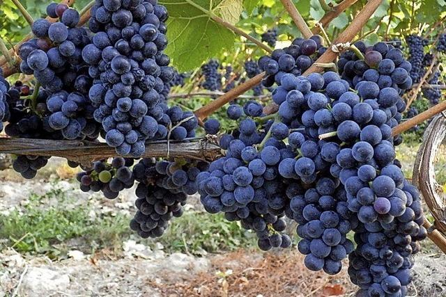 Weinverkauf läuft schleppend
