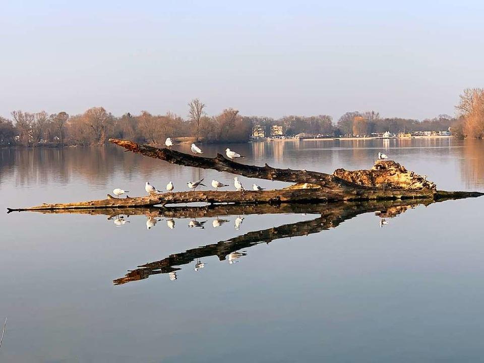 Flachwasserzonen am Südufer sind nicht... dauerhaft auf gutem Niveau zu halten.    Foto: Helmut Seller