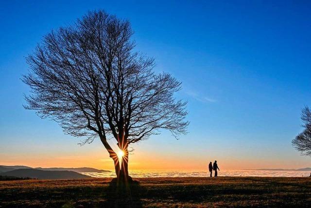 Über dem Nebelmeer strahlt die Abendsonne auf dem Schauinsland