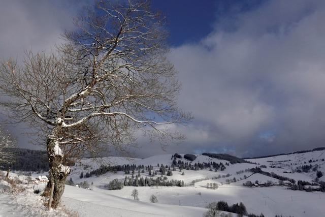 Weiße Pracht am Gießhübel im oberen Münstertal