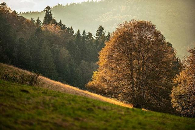 Wunderbare Herbststimmung auf dem Lipple