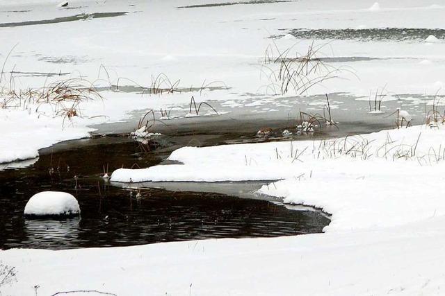 Am Herbolzheimer Anglersee sieht es aus wie in Skandinavien