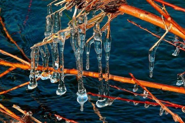 Wunderbare Eiskunst am Elzufer in Emmendingen