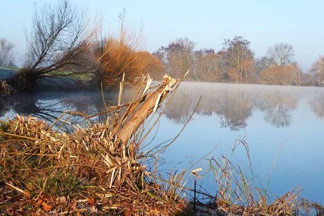 Der Kollmarsreuter Baggersee sieht ziemlich hässlich aus