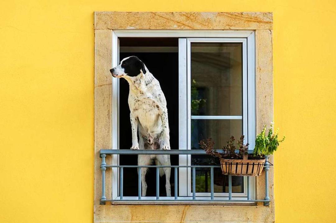 Fühlt sich der Hund wohl, tut das auch der Mensch, sagt Roberta Rio.  | Foto: Andrei Nekrassov