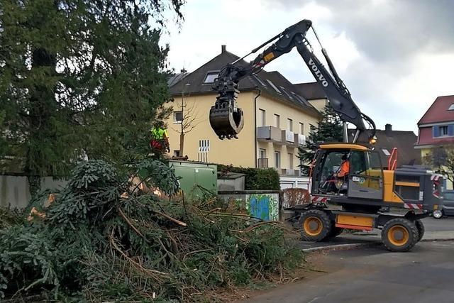 Neue Bäume für Friedhof