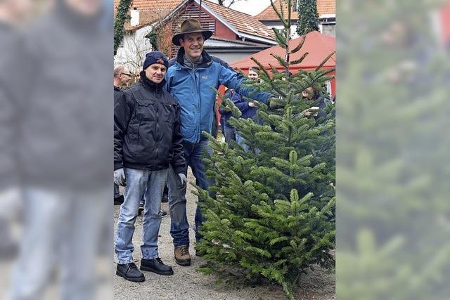 Die Waggis bieten wieder Christbäume zum Kauf an