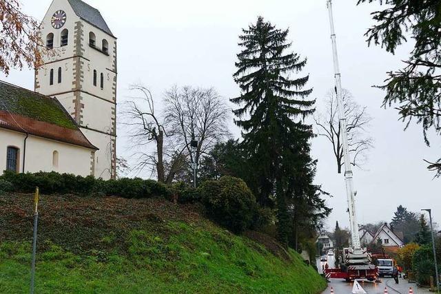 Die Sommerlinde an der Kirche in Betberg musste weg