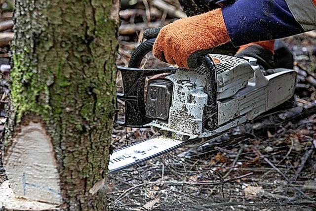 Waldgenossenschaft: Holzverkauf wird Privatsache