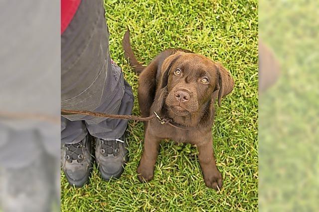 Gemeinderat stimmt Hundesteuererhöhung zu