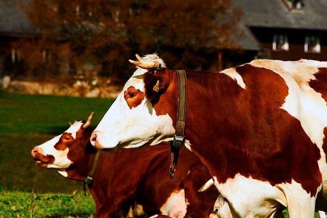 Südbadische Bauern profitieren nicht vom Aufschwung der Landwirtschaft