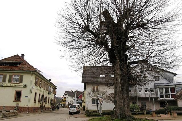 Nordweiler Dorflinde muss gefällt werden