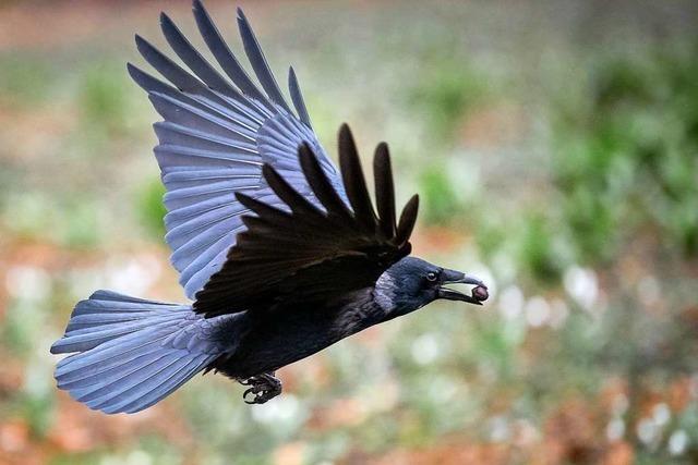 Polizei ermittelt wegen des in Tüllingen erschossenen Vogels