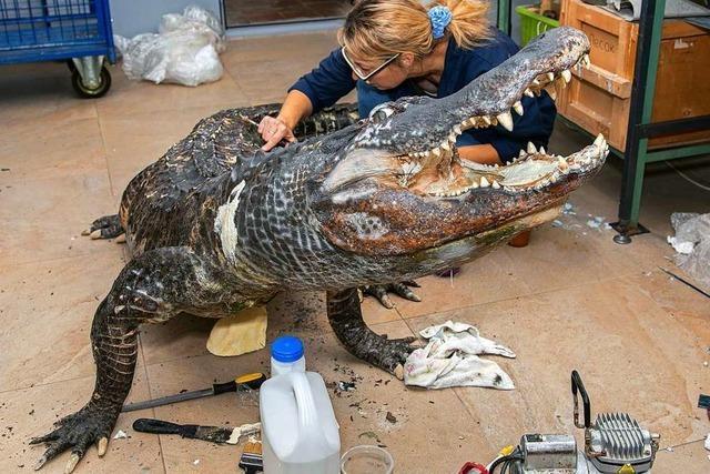 Russisches Museum stellt Berliner Weltkriegs-Alligator aus