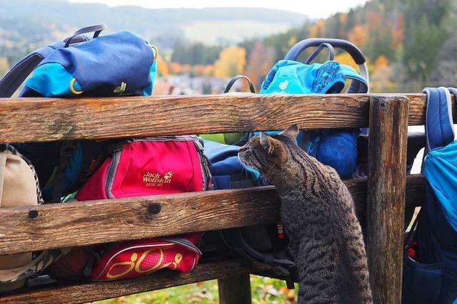 Maulburg bekommt eine zweite Waldkindergartengruppe