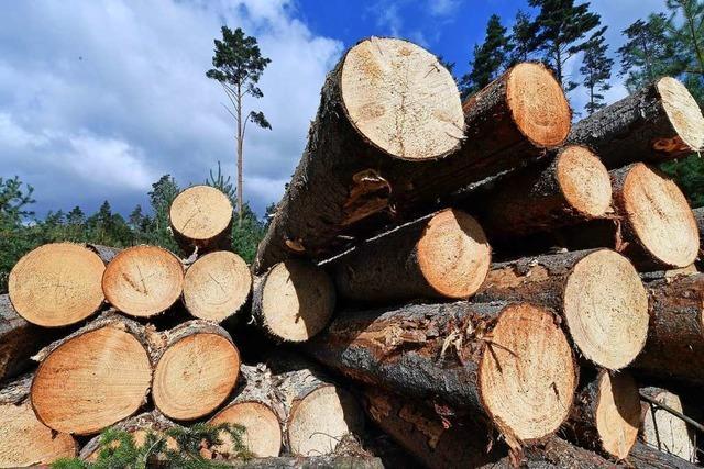 Hitze und Käferbefall machen dem Wald in Kippenheim zu schaffen