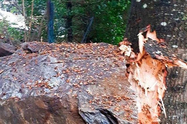 Geologen sehen bei den drei Felsstürzen in Todtnau keinen Zusammenhang