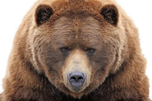 Von Bären und Menschen
