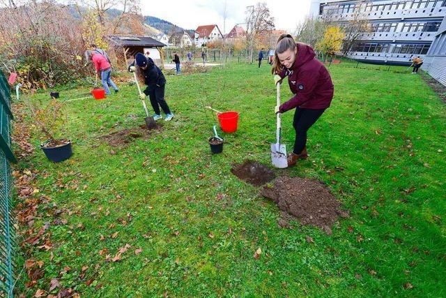 Das Land hält den Garten der Pädagogischen Hochschule am Leben