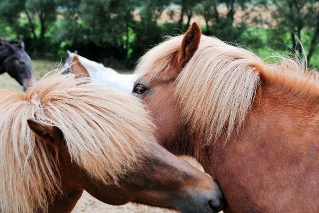 Rat stimmt Hundesteuer zu – Bürgerin bevorzugt aber Pferdesteuer