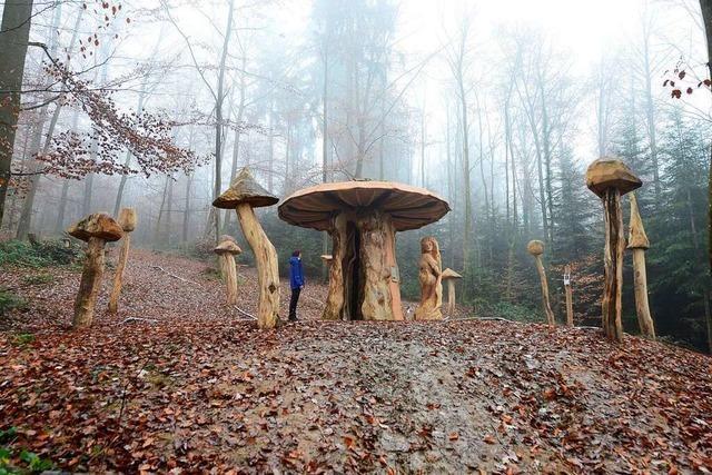 Der Pilzlehrpfad