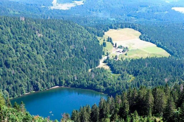 Der Feldsee steht unter Naturschutz – deswegen ist Baden verboten