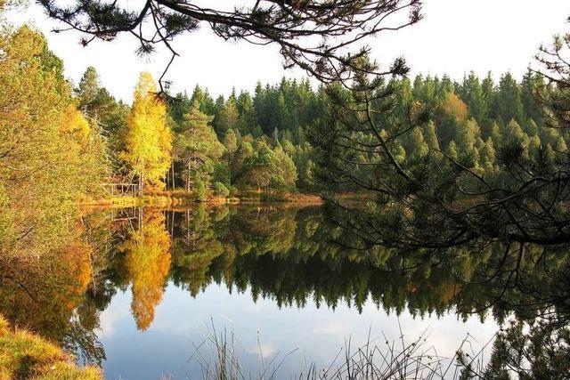 Der Blindensee bei Schönwald im Schwarzwald ist ein See ohne Boden