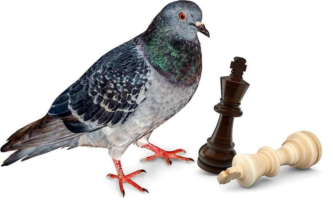Sie schmeißt alle Figuren um und wähnt...Sieger: die Taube auf dem Schachbrett.  | Foto: foto_tech/fotomek  (stock.adobe.com)