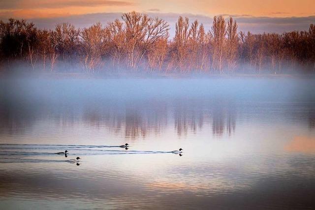 Am Rhein bei Burkheim gibt es Licht am Ende des Nebels