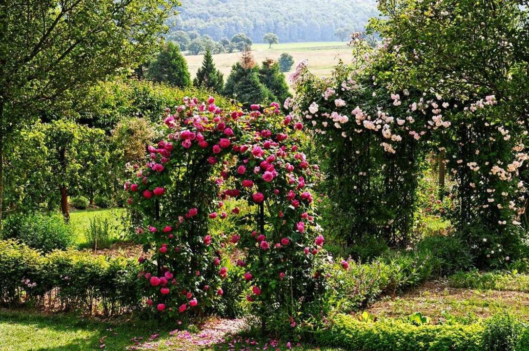 Die Königinnen der Blumen: Rosen  | Foto: Privat